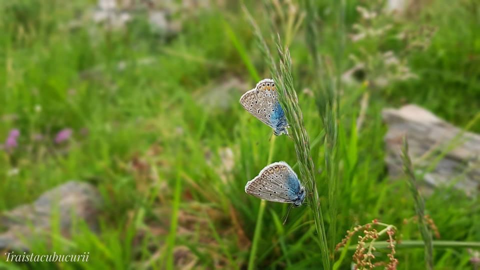 fluturiimei